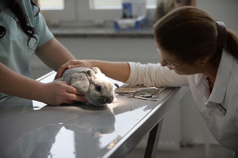Allgemeinuntersuchung Kaninchen