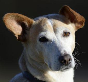 Dr. Birgit Seiffert Tierärztin / Tierarztpraxis www.tierarzt-botnang.de Hund Josy