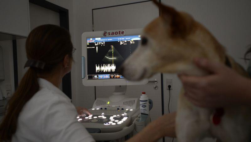 Wir haben sehr viel Erfahrung in modernster Ultraschalldiagnostik